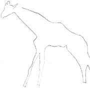 Striding giraffe